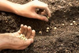The Seeds We Sow – Environmental Change